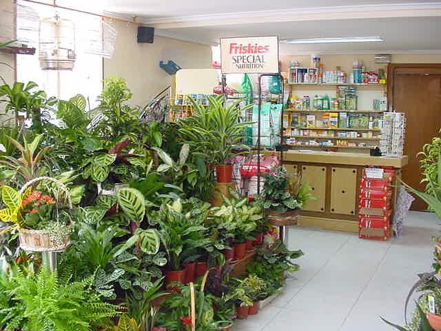 floristerias interflora: